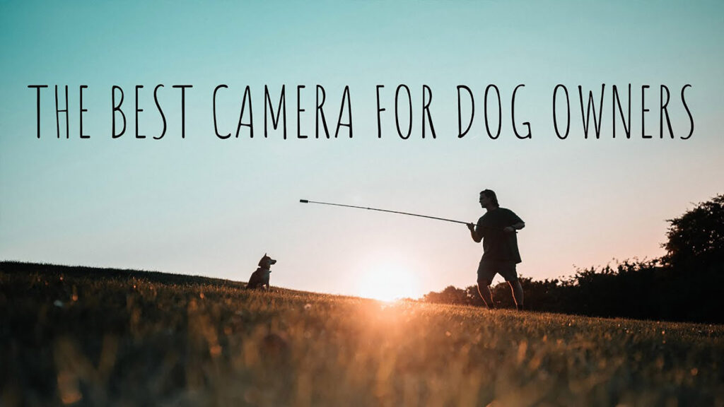 Sean Alami Insta360 ONE x2 Best Camera for Dog Owners